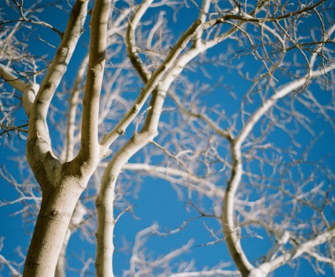 018-white-tree